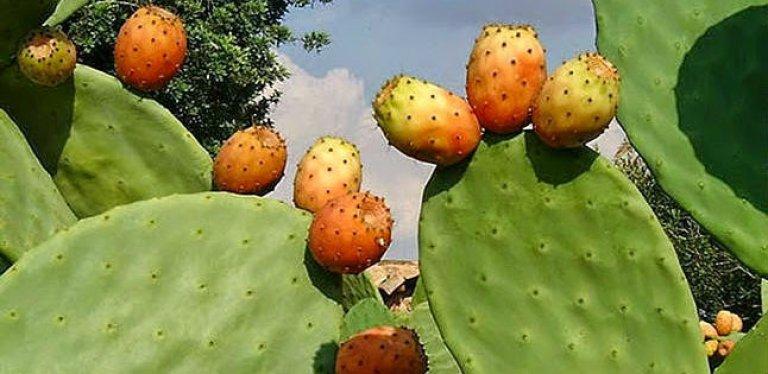 Najel aceite de semillas de higo chumbo (cactus) 80ml